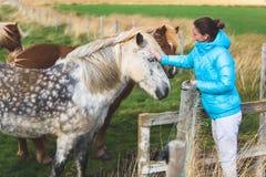 Ισλανδικά άλογα Στοκ φωτογραφία με δικαίωμα ελεύθερης χρήσης