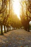 Ιταλία, Arona Η αλέα υψηλού ο δενδρώδης περίπατος Στοκ εικόνα με δικαίωμα ελεύθερης χρήσης