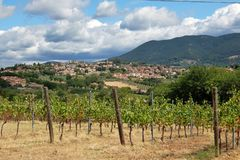 ιταλικοί αμπελώνες Γραφικό τοπίο στα ιταλικά επαρχία Στοκ Εικόνα