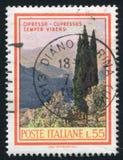 Ιταλικό κυπαρίσσι στοκ φωτογραφία