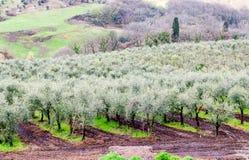 Ιταλία Τοσκάνη Θαυμάσια εκστρατεία της επαρχίας περιοχών σε Spri στοκ φωτογραφία με δικαίωμα ελεύθερης χρήσης