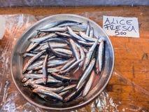 Ιταλικές αντσούγιες στον πάγκο fishpond στοκ φωτογραφία με δικαίωμα ελεύθερης χρήσης