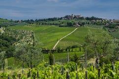 Ιταλικοί αμπελώνες γεωργίας τον Ιούλιο Στοκ Εικόνα