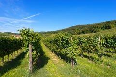 Ιταλικοί αμπελώνες - κρασί Valpolicella Στοκ φωτογραφία με δικαίωμα ελεύθερης χρήσης