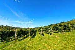 Ιταλικοί αμπελώνες - κρασί Valpolicella Στοκ Εικόνες