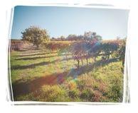 Ιταλικό τοπίο με την εκλεκτής ποιότητας επίδραση και την ανώμαλη άσπρη άκρη Στοκ Εικόνες