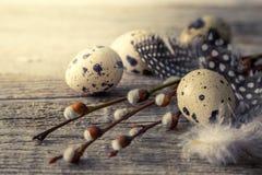 Ιτιά γατών με τα αυγά, αγροτικό ξύλινο υπόβαθρο Στοκ φωτογραφία με δικαίωμα ελεύθερης χρήσης