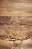 Ιτιά γατών στο ξύλινο υπόβαθρο Στοκ εικόνα με δικαίωμα ελεύθερης χρήσης