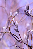 ιτιά δέντρων κλάδων Στοκ φωτογραφίες με δικαίωμα ελεύθερης χρήσης
