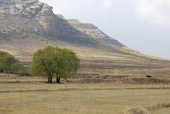 ιτιά δέντρων Στοκ εικόνες με δικαίωμα ελεύθερης χρήσης