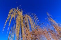 Ιτιά και ουρανός στοκ εικόνα με δικαίωμα ελεύθερης χρήσης