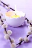 ιτιά κεριών στοκ εικόνες