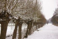 Ιτιά κλαδεμένων δέντρων Στοκ Φωτογραφία