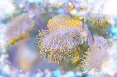 Ιτιά με τους ανθίζοντας γκρίζους χνουδωτούς οφθαλμούς πρώιμη άνοιξη λουλουδιών Στοκ Φωτογραφία