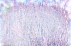 Ιτιά με τους ανθίζοντας γκρίζους χνουδωτούς οφθαλμούς πρώιμη άνοιξη λουλουδιών Στοκ Φωτογραφίες