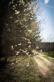 Ιτιά σφραγίδων Στοκ φωτογραφία με δικαίωμα ελεύθερης χρήσης