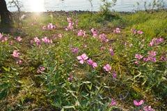 Ιτιά-χορτάρι στην όχθη ποταμού στοκ φωτογραφία με δικαίωμα ελεύθερης χρήσης