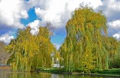 Ιτιές φθινοπώρου Στοκ Φωτογραφία