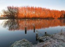 Ιτιές χειμερινού χρώματος Στοκ Φωτογραφίες