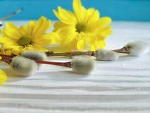 Ιτιών κίτρινο λουλουδιών συγχαρητηρίων εποχής εγκαταστάσεων ντεκόρ εορτασμού γατών ευτυχές, έννοια χαιρετισμού καρτών Στοκ φωτογραφία με δικαίωμα ελεύθερης χρήσης