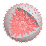 ιός ανατομίας απεικόνιση αποθεμάτων