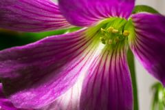 Ιώδες και πράσινο λουλούδι στοκ εικόνες με δικαίωμα ελεύθερης χρήσης