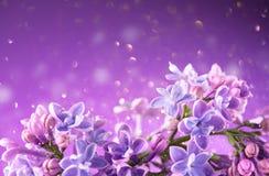 Ιώδες λουλουδιών υπόβαθρο σχεδίου τέχνης δεσμών ιώδες Όμορφη ιώδης ιώδης κινηματογράφηση σε πρώτο πλάνο λουλουδιών στοκ φωτογραφίες