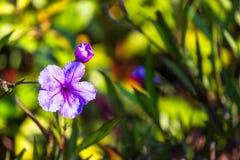 Ιώδες λουλουδιών υπόβαθρο φύλλων θαμπάδων πράσινο με το διάστημα αντιγράφων Στοκ Φωτογραφία