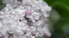 Ιώδες λουλούδι κάτω από το μπλε ουρανό, ενάντια στα όμορφα φω'τα bokeh και σπινθηρίσματος απόθεμα βίντεο
