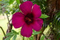 Ιώδες λουλούδι μέσα στοκ εικόνες με δικαίωμα ελεύθερης χρήσης