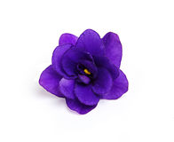 Ιώδες λουλούδι στοκ φωτογραφίες