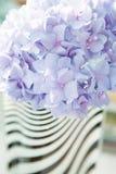 Ιώδες hortensia λουλουδιών Στοκ φωτογραφία με δικαίωμα ελεύθερης χρήσης