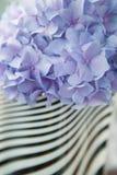 Ιώδες hortensia λουλουδιών Στοκ εικόνα με δικαίωμα ελεύθερης χρήσης
