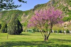 ιώδης άνοιξη πάρκων στοκ εικόνες με δικαίωμα ελεύθερης χρήσης