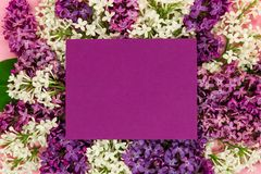 Ιώδης δέσμη λουλουδιών με το ιώδες κενό και θέση για το κείμενο Σύνορα Syringa στοκ εικόνα