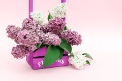 Ιώδης δέσμη λουλουδιών σε ένα ιώδες ξύλινο καλάθι πέρα από το ρόδινο υπόβαθρο Όμορφο ιώδες ιώδες σχέδιο συνόρων Πάσχας ζωής λουλο Στοκ Εικόνες