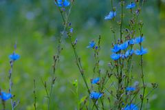 Ιώδη λουλούδια στον κήπο στοκ φωτογραφίες με δικαίωμα ελεύθερης χρήσης