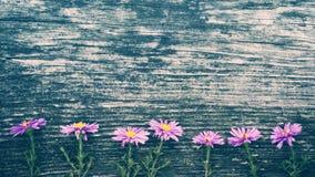 Ιώδη λουλούδια φθινοπώρου στο παλαιό ξύλινο υπόβαθρο Στοκ Εικόνες