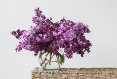 Ιώδη λουλούδια Στοκ Φωτογραφίες