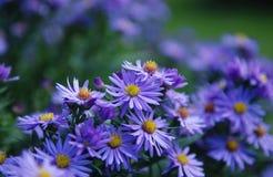 Ιώδη λουλούδια στοκ εικόνα