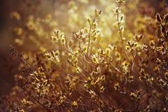 Ιώδεις κλάδοι με τη νέα ηλιοφάνεια φύλλων την άνοιξη Στοκ Εικόνα