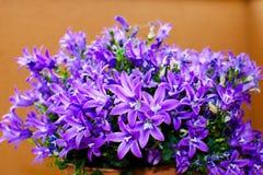 Ιώδες λουλούδι Στοκ Εικόνες