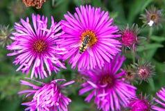 Ιώδες λουλούδι Στοκ εικόνες με δικαίωμα ελεύθερης χρήσης