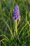Ιώδες λουλούδι Στοκ φωτογραφία με δικαίωμα ελεύθερης χρήσης