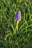 Ιώδες λουλούδι 2 Στοκ Εικόνα