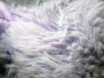 Ιώδες πορφυρό δασύτριχο ύφασμα στοκ φωτογραφία με δικαίωμα ελεύθερης χρήσης