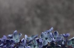 Ιώδες πλαίσιο σύνθεσης λουλουδιών μακρο Στοκ Φωτογραφία