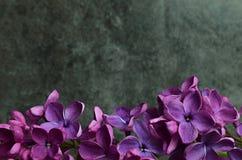 Ιώδες πλαίσιο σύνθεσης λουλουδιών μακρο Στοκ εικόνα με δικαίωμα ελεύθερης χρήσης