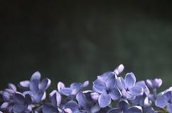 Ιώδες πλαίσιο σύνθεσης λουλουδιών μακρο Στοκ φωτογραφία με δικαίωμα ελεύθερης χρήσης