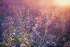 Ιώδες Floral θερινό υπόβαθρο Στοκ φωτογραφία με δικαίωμα ελεύθερης χρήσης